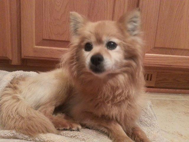 060314 Found Pup