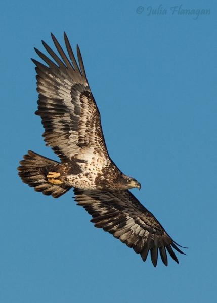 122912-birds-01