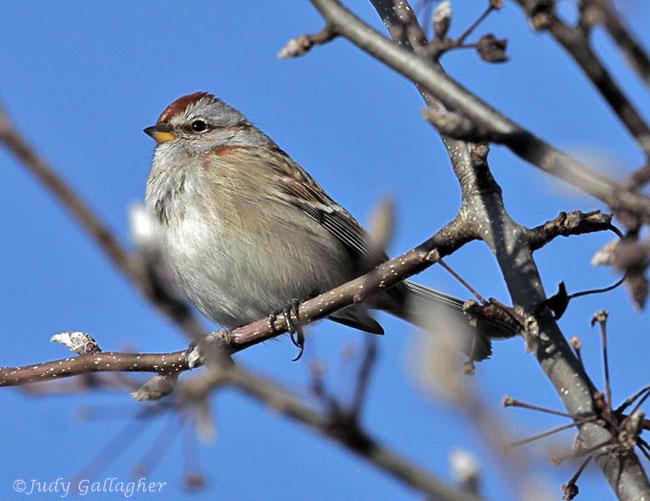 122912-birds-05