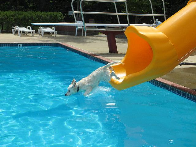 Manassas Dog-a-pool-ooza