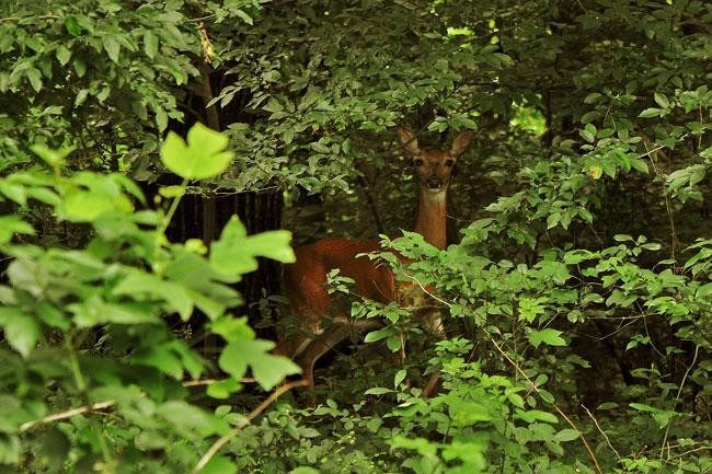 030113-deer-01