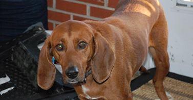 012014 Found dog