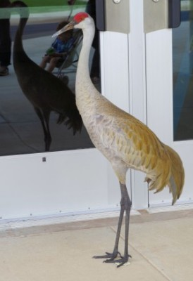 051814 crane
