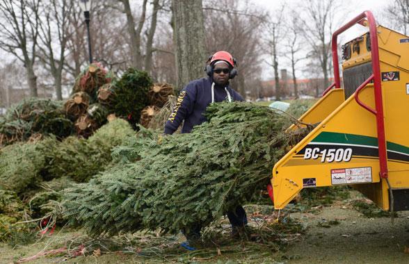 christmas tree grinding